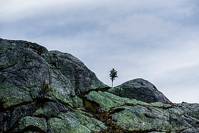 p248m2107539 by BY