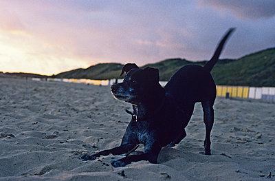 Hund am Strand - p2684644 von Christof Mattes