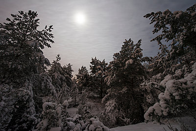 Forest in the winter - p312m1211231 by Martin Almqvist