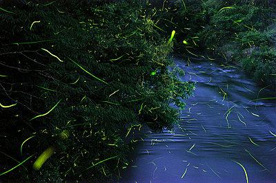 Fireflies - p5149328f by Hiroyuki Takeno