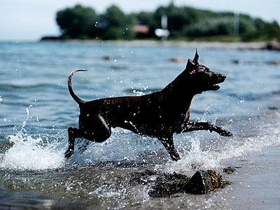 Hundstage / Dogdays - p551m2005774 von Kai Peters