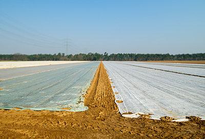 Landscape agriculture, Hesse, Germany - p1132m1032482 by Mischa Keijser