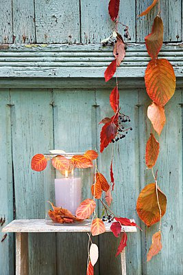 Strings of threaded autumn leaves and lantern against wooden wall - p1183m995826 by Sch�tz, Anke