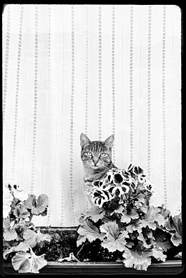 The feline plant - p1245m1148708 by Catherine Minala