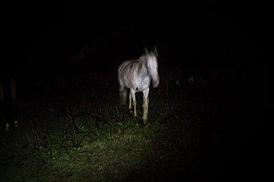 Horse - p1479m2004814 by Helio Léon