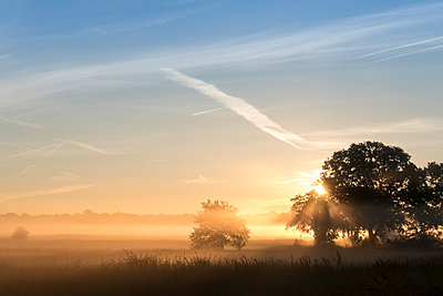 Sunrise in the morning fog - p739m1170257 by Baertels