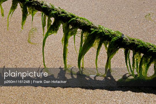 Seetang an einem Tau - p260m1161248 von Frank Dan Hofacker