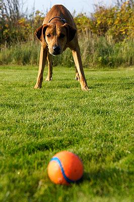 Ballspiel - p346m1492866 von Knut Schulz