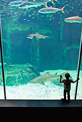Boy admiring shark in aquarium - p42917181f by Hybrid Images