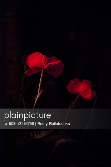 p1509m2116766 by Romy Rolletschke