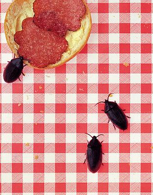 Kakerlakenattacke - p2520046 von Jens Dommermuth
