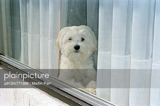 Belgium - p912m771388 by Martin Parr