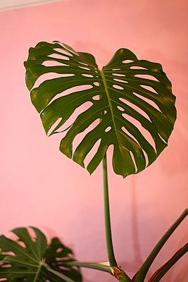 Giant leaf - p1063m2151396 by Ekaterina Vasilyeva