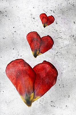 Drei Herzen - p450m1561840 von Hanka Steidle