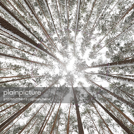 Forest in winter - p1275m2254113 by cgimanufaktur