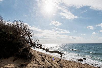 Strandgut im Gegenlicht - p949m1201281 von Frauke Schumann