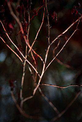 Whitered bush - p1327m2135172 by elenahelfrecht