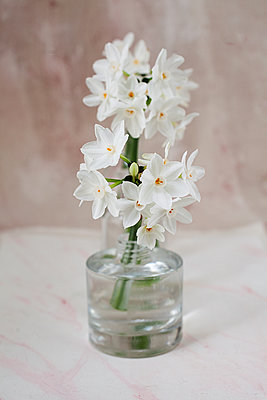 Still life with Narcissus Paperwhites - p1470m2030751 by julie davenport