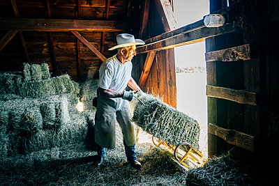 Caucasian farmer in barn pulling bale of hay - p555m1219509 by Inti St Clair
