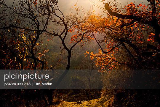 p343m1090318 von Tim Martin