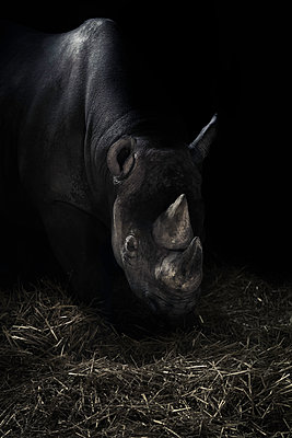 Rhinoceros - p1280m1488281 by Dave Wall