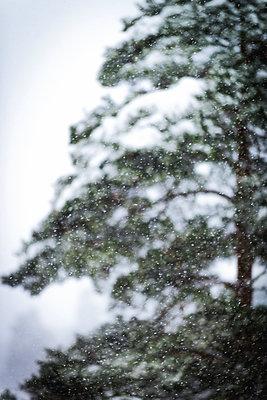 Verschneiter Wald - p1418m1572043 von Jan Håkan Dahlström