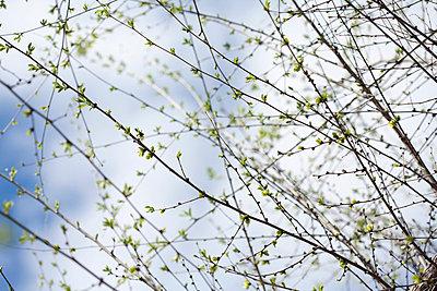 Fine - p4950103 by Jeanene Scott