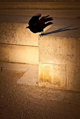 vogel startet - p627m670929 by Chris Keller