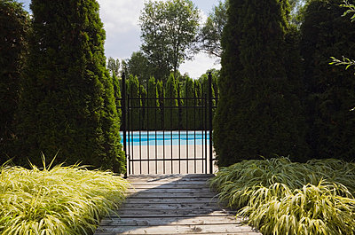 Wooden Walkway Leading To An Inground Swimming Pool Surrounded By A Cedar Tree Hedge;Quebec Canada - p442m839668 by Perry Mastrovito