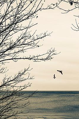 Seaside - p975m954172 by Hayden Verry