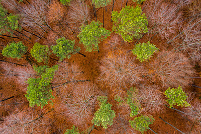 Germany, Baden-Wuerttemberg, Swabian Franconian forest, Aerial view of forest in autumn - p300m2069540 by Stefan Schurr