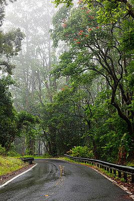 Hawaii, Maui, The lush Road To Hana. - p442m860365 by Jenna Szerlag