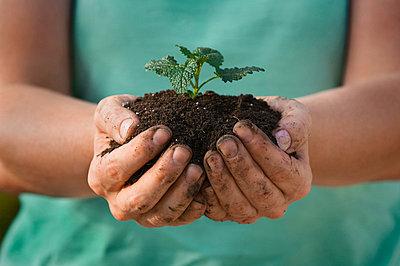 Handful of fertile earth - p4427747f by Design Pics