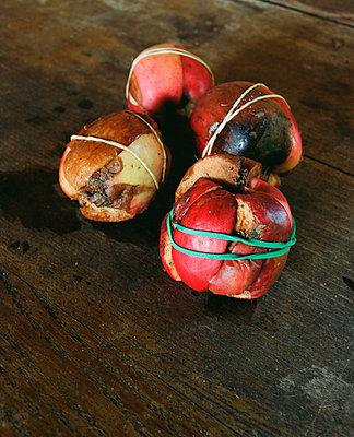 Alte Äpfel verbinden - p4530085 von Mylène Blanc