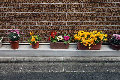 Flower pots next to wall - p664m1132598 by Yom Lam
