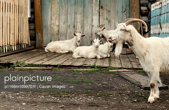 p1166m1099701f von Cavan Images