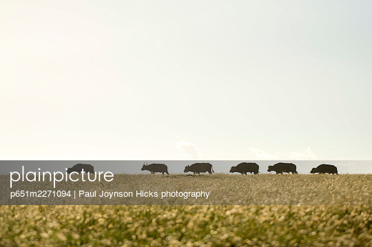 p651m2271094 von Paul Joynson Hicks photography