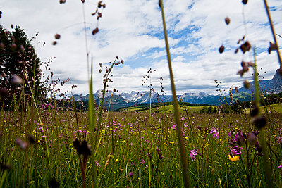 Bergpanorama Südtirol - p1386m1442144 von beesch
