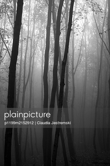 Deciduous forest - p1199m2152912 by Claudia Jestremski