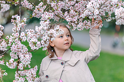 Portrait of little girl in a park watching blossoms of Japanese Cherry - p300m2181054 by Oxana Guryanova