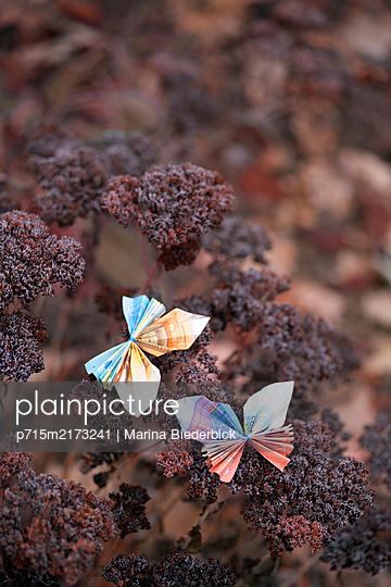 Two butterflies, folded money - p715m2173241 by Marina Biederbick