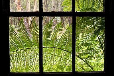 Fern in front of window - p1016m792527 by Jochen Knobloch