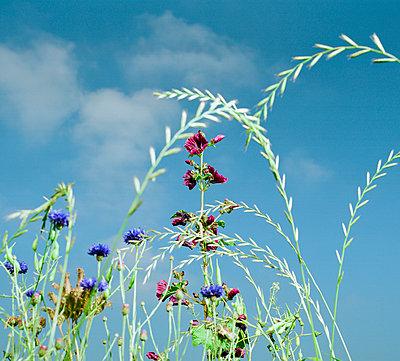Wild flowers - p1132m1020456 by Mischa Keijser
