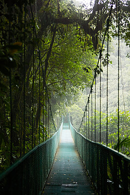 View of hanging bridge in forest - p312m1472188 by Anna Kern