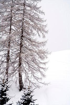Schneebedeckte Landschaft mit Baeumen - p627m672293 by Kirsten Nijhof
