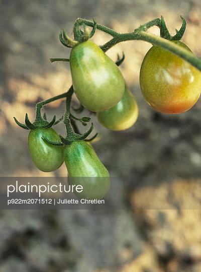 Unreife Tomaten - p922m2071512 von Juliette Chretien