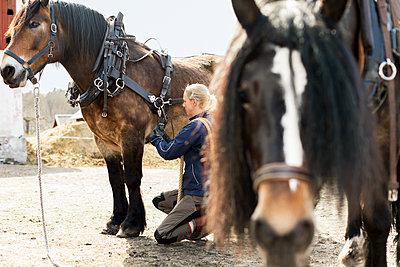 Woman with horse - p312m1498941 by Susanne Kronholm