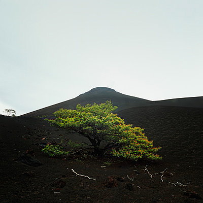 Momotombo, Nicaragua - p844m880785 von Markus Renner