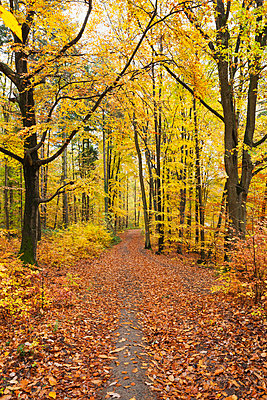 Germany, Rhineland-Palatinate, Palatinate Forest Nature Park in autumn - p300m2042060 by Gaby Wojciech