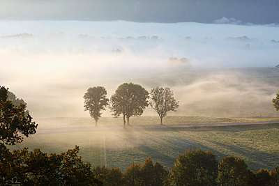 View of tree in fog - p300m659995f by Martin Siepmann